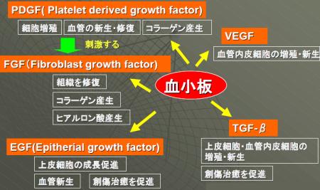 Platelets release various growth factors